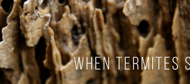 When Termites Strike